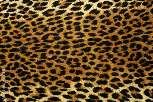 Door stickers Leopard Leopard Spots