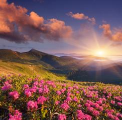 Naklejka Summer flowers in the mountains