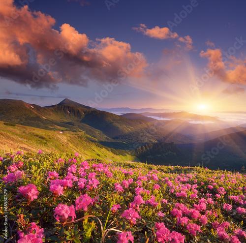 Foto op Aluminium Aubergine Summer flowers in the mountains