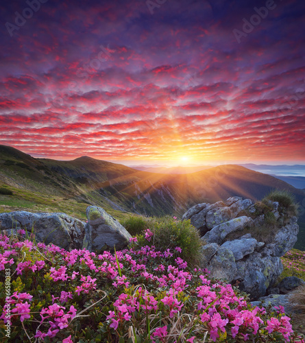 Tuinposter Aubergine Dawn with flowers in the mountains