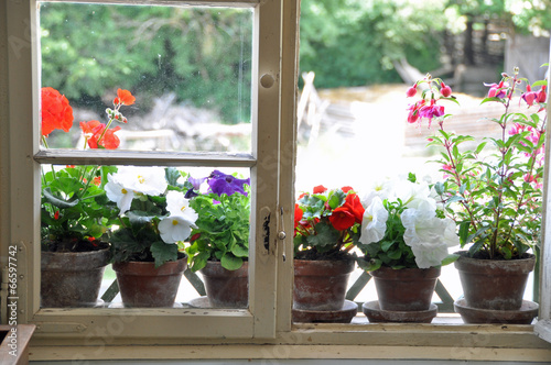 Blumen Auf Fensterbank Buy This Stock Photo And Explore Similar