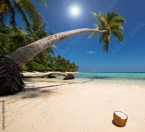Foto-Kissen - Coconut Beach (von Loocid GmbH)