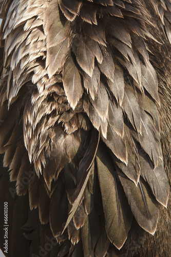 Close up of cormorant birds feather detail
