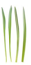 Grass Blades