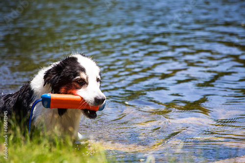 dog at the pond Fototapet