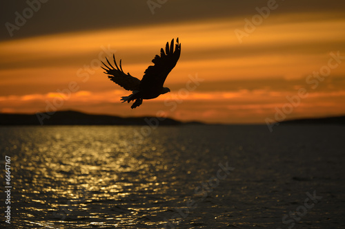 Foto auf Gartenposter Adler Eagle Silhouette