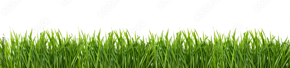 Fototapety, obrazy: Green grass isolated on white background.