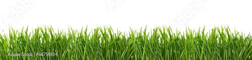 Poster Gras Green grass isolated on white background.