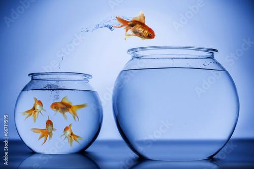 ryba-szczesliwie-skacze