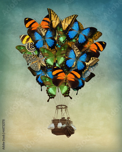 Butterfly hot air balloon - 66732178