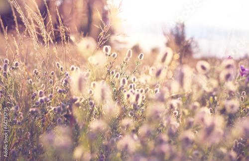 Meadow Tableau sur Toile