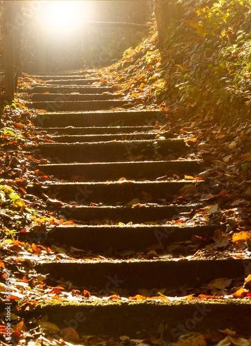 Steintreppe im mystischen Wald