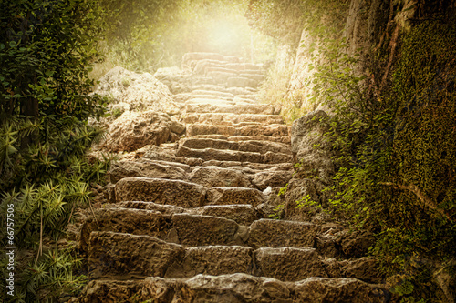 Aluminium Prints Road in forest Holy Heaven Light