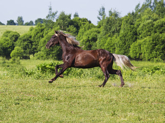 Brown horse riding across the field