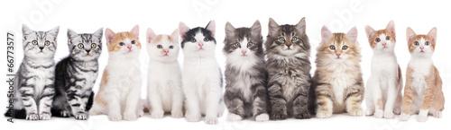 Foto op Plexiglas Kat Katzengruppe