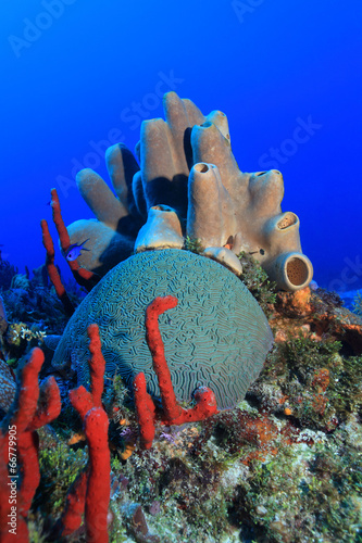 Staande foto Koraalriffen Colorful tropical coral reef in the caribbean sea