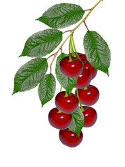 Fototapeta Owoce branch of berries cherries with leaves isolated on white backgro