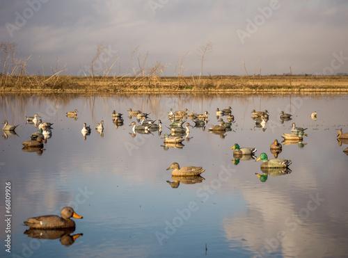 Foto op Canvas Jacht Duck decoys
