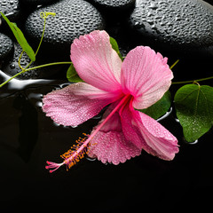 Fototapeta Do Spa spa concept of blooming pink hibiscus, green tendril passionfl