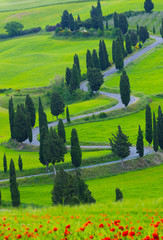 Fototapeta Toskania Beautiful landscape of Tuscany with twisting road and cypresses