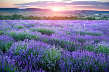 Obraz na Szkle Lawenda Meadow of lavender.