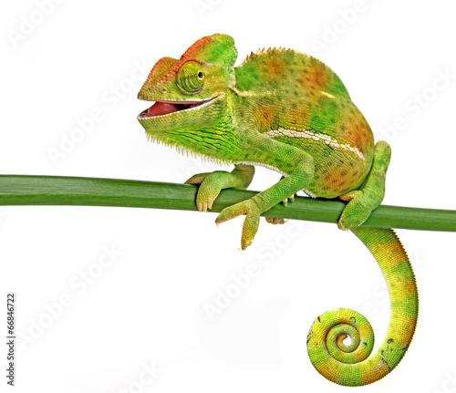 In de dag Kameleon happy chameleon