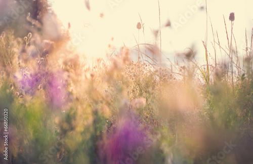 Canvas Print Meadow