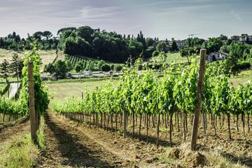 Fototapeta na wymiar Vine plantations and farmhouse in Italy
