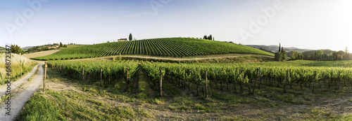Deurstickers Toscane Vineyards in Tuscany