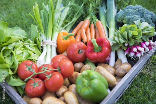 In de dag Groenten Gros plan panier de légumes