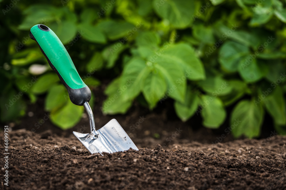 Fototapety, obrazy: Gardening shovel in the soil