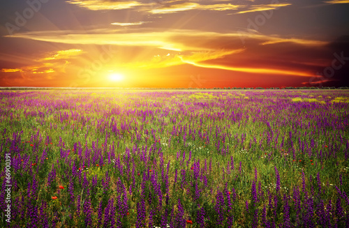 Papiers peints Morning Glory Field with grass, violet flowers and red poppies against sunset