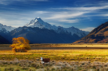 Mount Cook, Canterbury, New Ze...