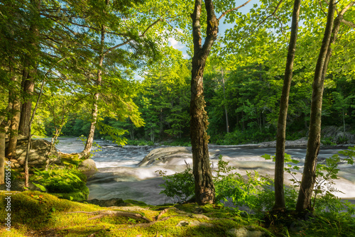 River in the forest - 66915556