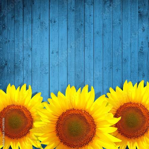 Sunflower Leaning On Turquoise Wooden Background