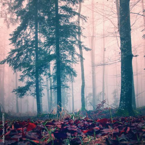 misty-czerwony-kolor-drewna