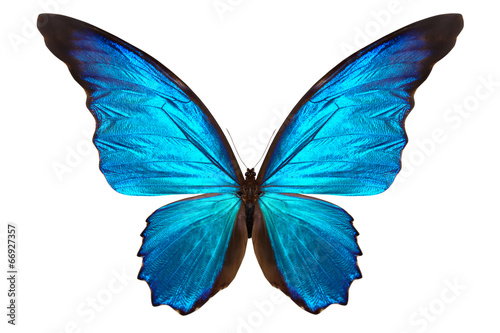 Fototapeta  beautiful butterfly isolated on white