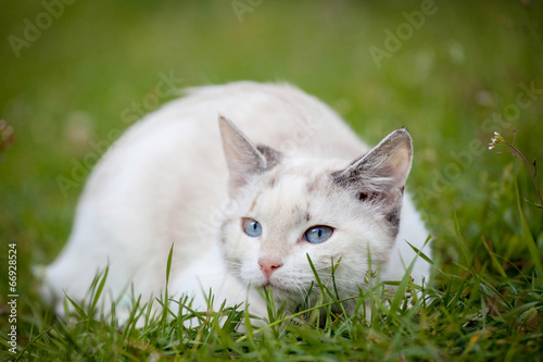 Fotografie, Obraz  Cute white kitten