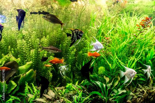 Ttropiczne akwarium słodkowodne z rybami