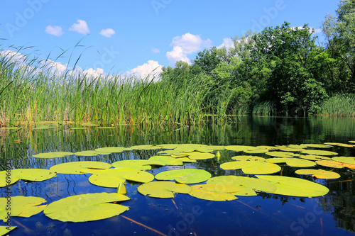 Photo Stands Water lilies water lily leafs on lake