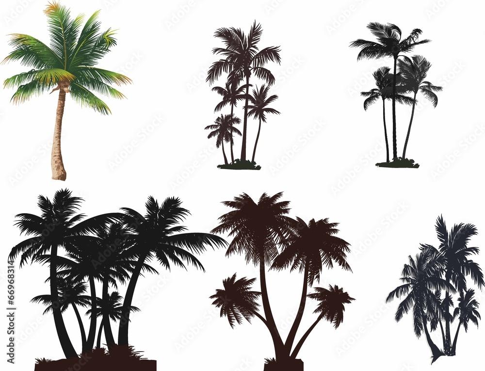 Fototapeta Palmiye ağaçları seti
