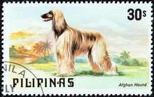 Afghan Hound (Philippines 1979)