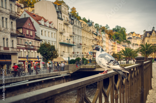 Fotografie, Obraz  Karlovy Vary, dove