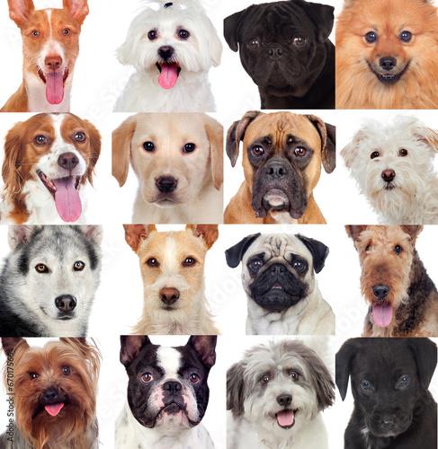 kolaz-z-wieloma-psami