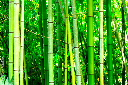 In a bamboo forest #67033302