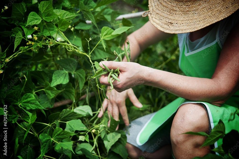 Fototapety, obrazy: Lavorare nell'orto