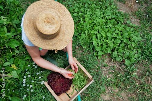 Foto  Lavorare nell'orto