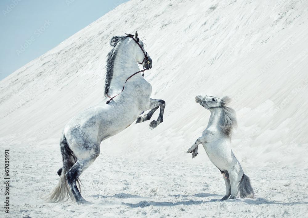 Fototapety, obrazy: Wspaniała scena skaczących koni