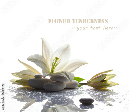 Poster de jardin Nénuphars spa still life with white lily