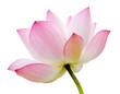 Leinwandbild Motiv isolated lotus
